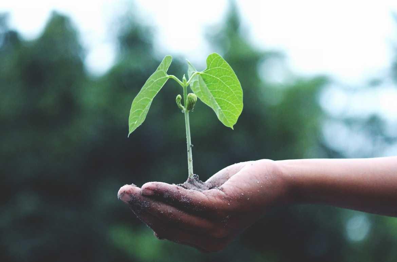 Grow Business Using Advocacy Marketing